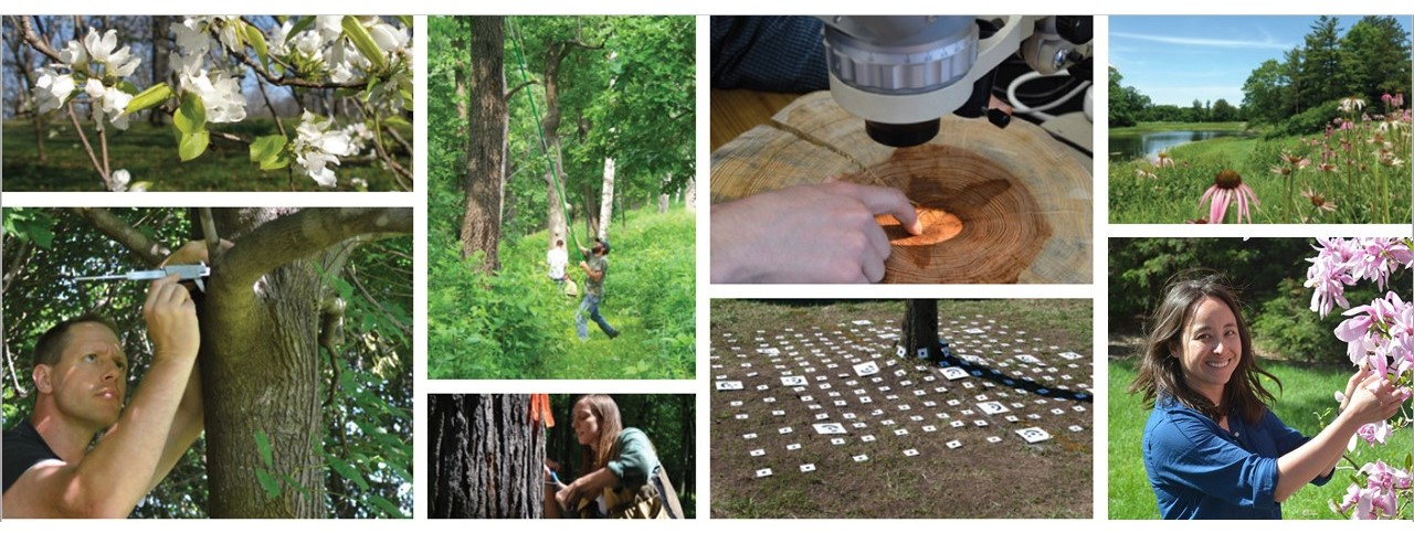 Eight photos showing the diversity of research at The Morton Arboretum: white blossoms on tree branch, researcher measuring branch, researcher using long pole to sample tree canopy, researcher taking tree core, microscope examining tree rings