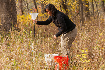 Soil ecologist collecting data in a forest with grassy understory in the fall.