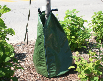 Irrigation bag for watering new trees.