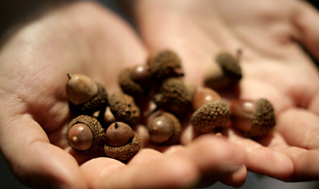 A handful of acorns - Donate and support